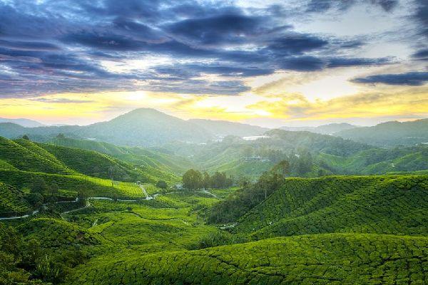 malasia-cameron-highlands-cameron-highlands-289.jpg