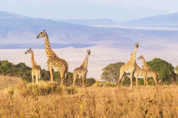 tanzania-crater-de-ngorongoro-405.jpg