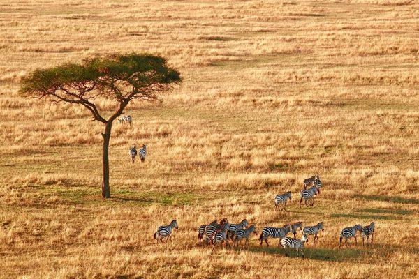 tanzania-lago-manyara-404.jpg