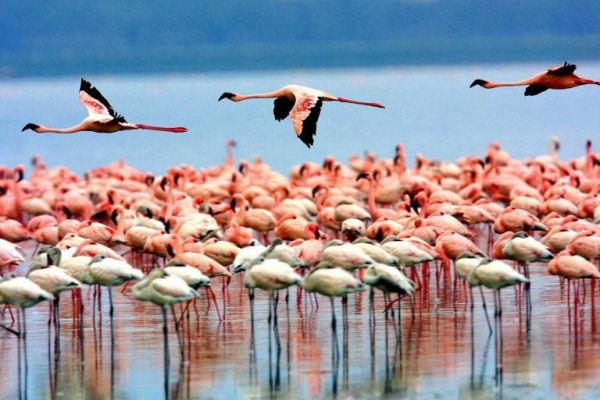 tanzania-lago-manyara-414.jpg