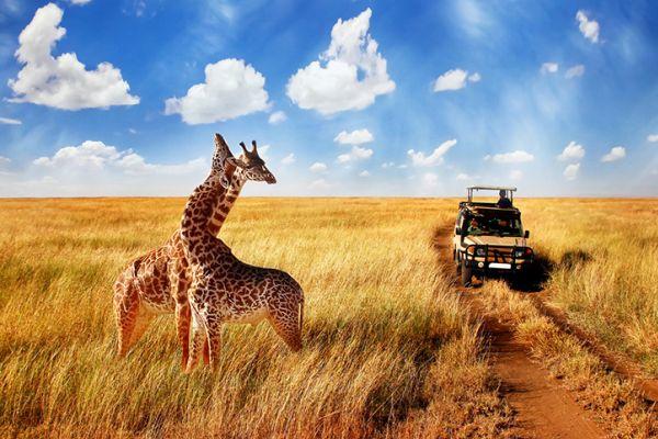 tanzania-serengeti-415.jpg
