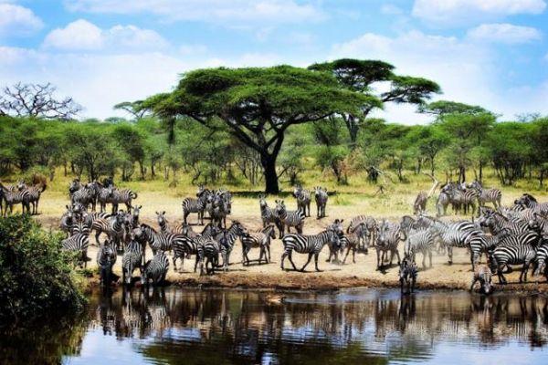 tanzania-serengeti-416.jpg