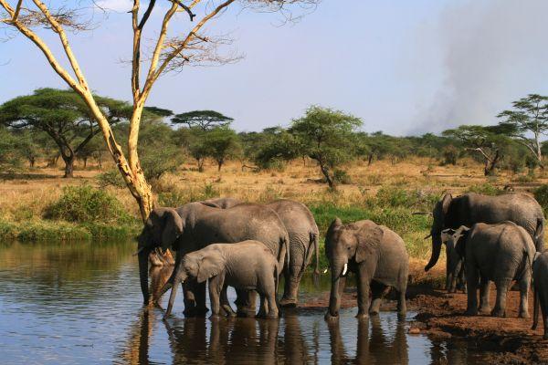 tanzania-serengeti-417.jpg